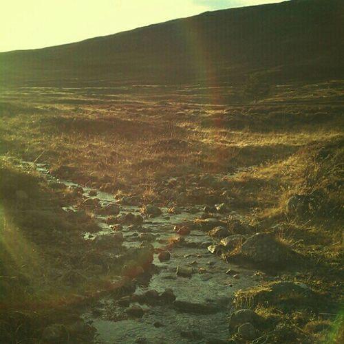 Oh bonnie Scotland :) Mycamerastories Adventures Royaldeeside Stream water heather sunshine lensflare walkingthedog love scotland walks