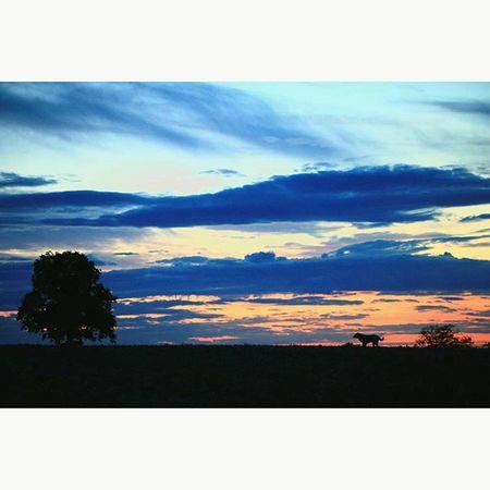 🌄📷😍 Dog Shadow Landscape Photographie  Lacampagne Cestlavie Yeah