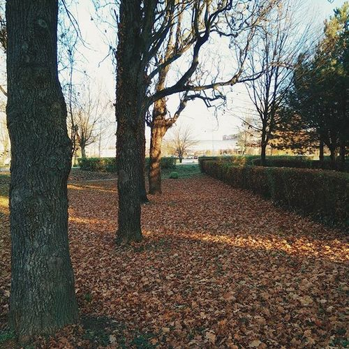More leaves 🍁🍂 Sky Tree Wood Leaves Autumn Love 20likes Instagood Instadaily Oneplus Oneplusone Oneplustech Vukovar Borovozanepovjerovat Christmas December Brown Awesome Color VSCO Vscocam Vscogrid