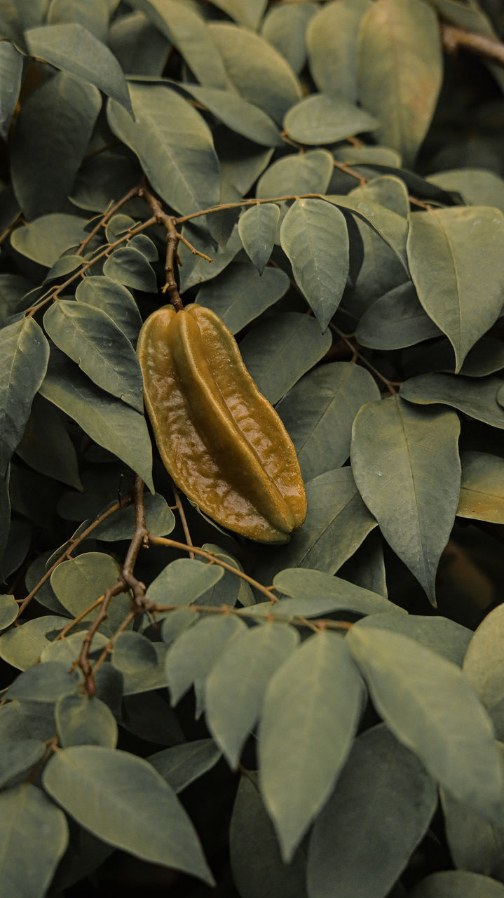 leaf, plant part, nature, close-up, plant, no people, growth, beauty in nature, day, green color, outdoors, freshness, high angle view, leaves, vulnerability, fragility, dry, autumn, flower, botany