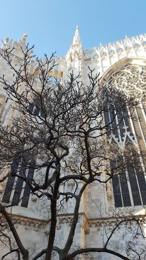 Duomo Di Milano Duomo Milano Architecture Tree Springtime Sunny Day Afternoon Tree Religion Sky Architecture
