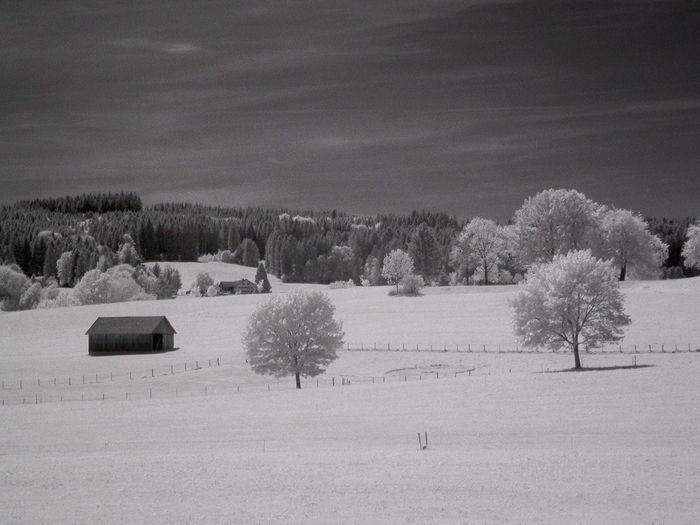 Scenic Landscape In Winter