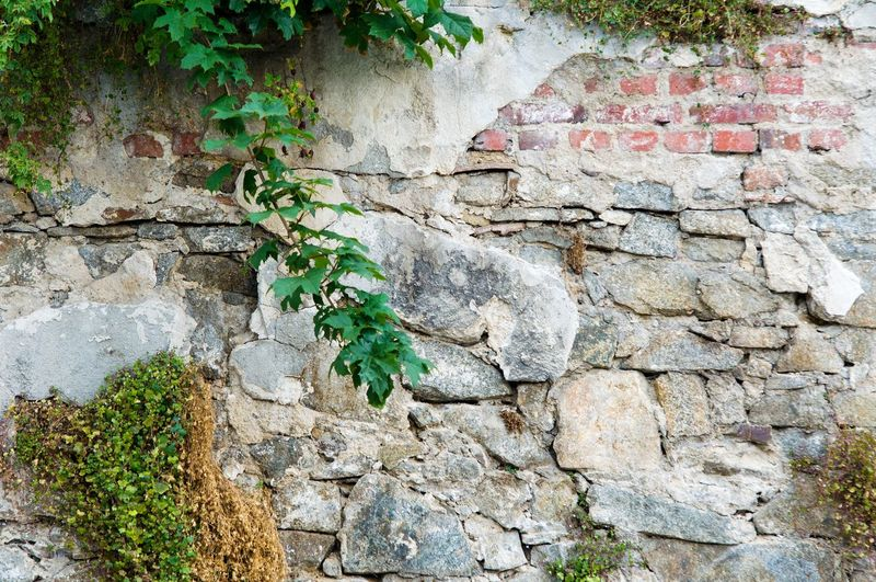 Close-up of plant against stone wall