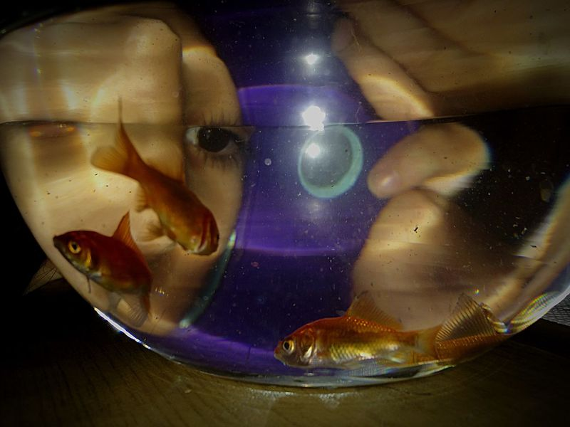 My grandma brought us some goldfish, just hope they will still be alive in the morning Fishbowl Goldfish Face Vignette Distortion Glitch Experimenting Photography