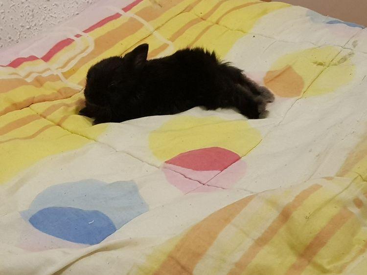 Cama Agusto Agusto👌 Relajación Relaxing Rabbit Conejo Blak Amor ♥ Agotamiento Sleaping Relajarse Ternura Dormir Conejo Negro Painted Image Paint Ink Day