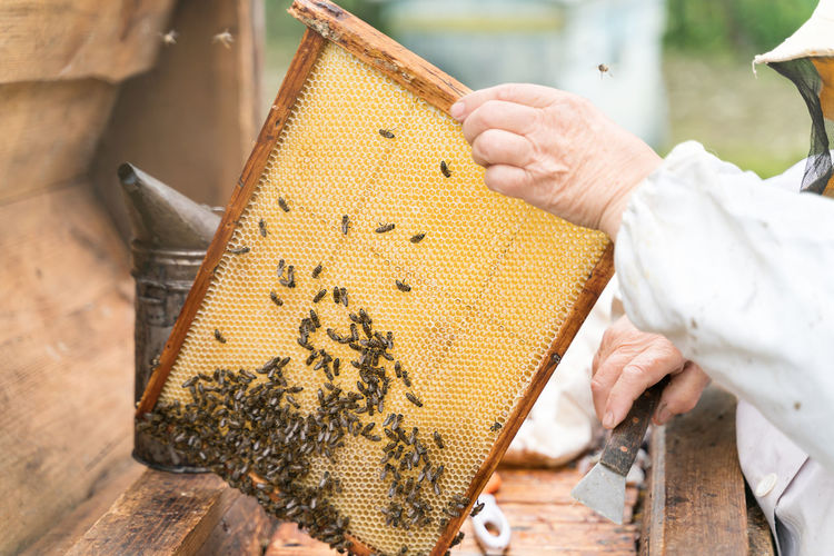 Cropped hand of beekeeper holding honeycomb at park