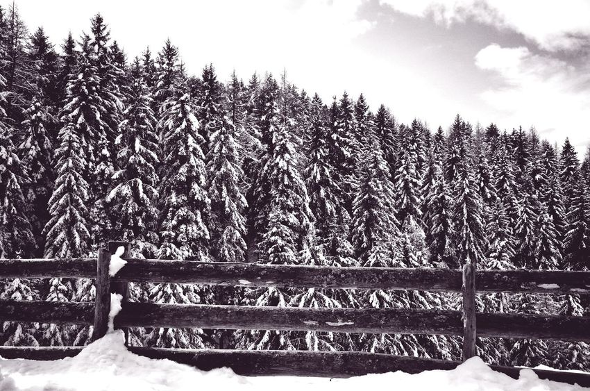 Sky Tree Nature Outdoors Beauty In Nature Cold Temperature Close-up Fence Winter Landscape Scenics Dolomites, Italy Season  Wintertime Snow ❄ Travel Nature Miles Away Weather Remote Location Snowfall Patterns In Nature Repetition Pine Trees