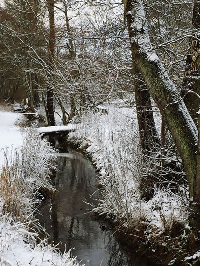 Frozen stream amidst trees in forest during winter