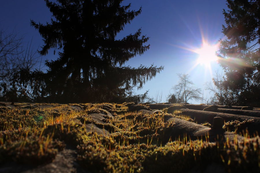 Beauty In Nature Countryside Landscape Lens Flare Moss Sunlight Tranquil Scene Tree