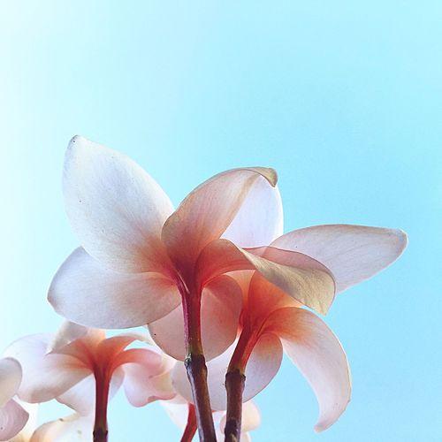 EyeEm Gallery EyeEm Nature Lover Flowerporn Flower_Collection NEM Mood Flors Flowers Eye4photography  Happy Times IPhoneography