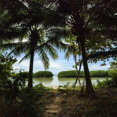 mangroves near obo-ob mangrove garden BantayanIsland  Bantayan Wowphilippines Beach beachlife shareph travelgram
