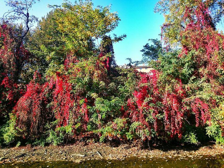 Indiansummer Autumn Autumn Colors Autumn Leaves Leaves Colors