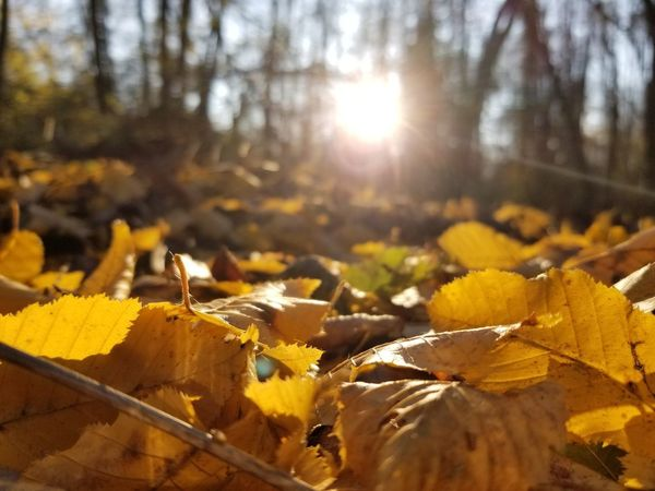 Tree Bird Forest Sunlight Autumn Close-up Streaming Shining Tree Trunk