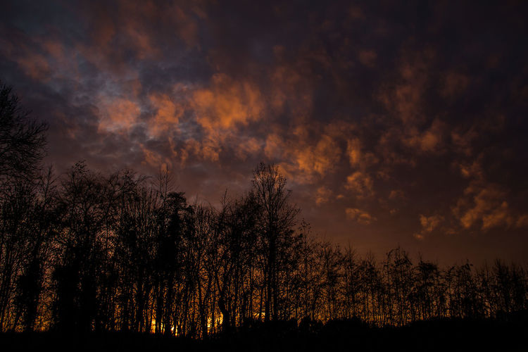 Beauty In Nature Cloud - Sky Forest Forest Fire Growth Landscape Moody Sky Nature Nature Night No People Orange Orange Sky Outdoors Scenics Silhouette Sky Sunset Tranquil Scene Tranquility Tree
