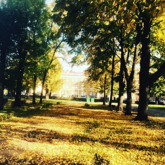 Autumn #fall First Eyeem Photo