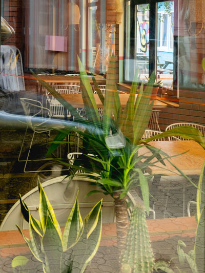 Potted plants on glass window