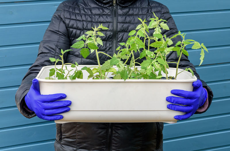 Midsection of person holding purple potted plant