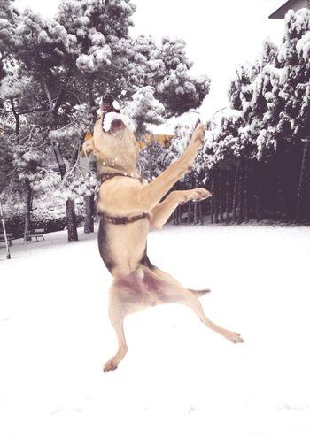Dog Ilovemydog Snow Animals