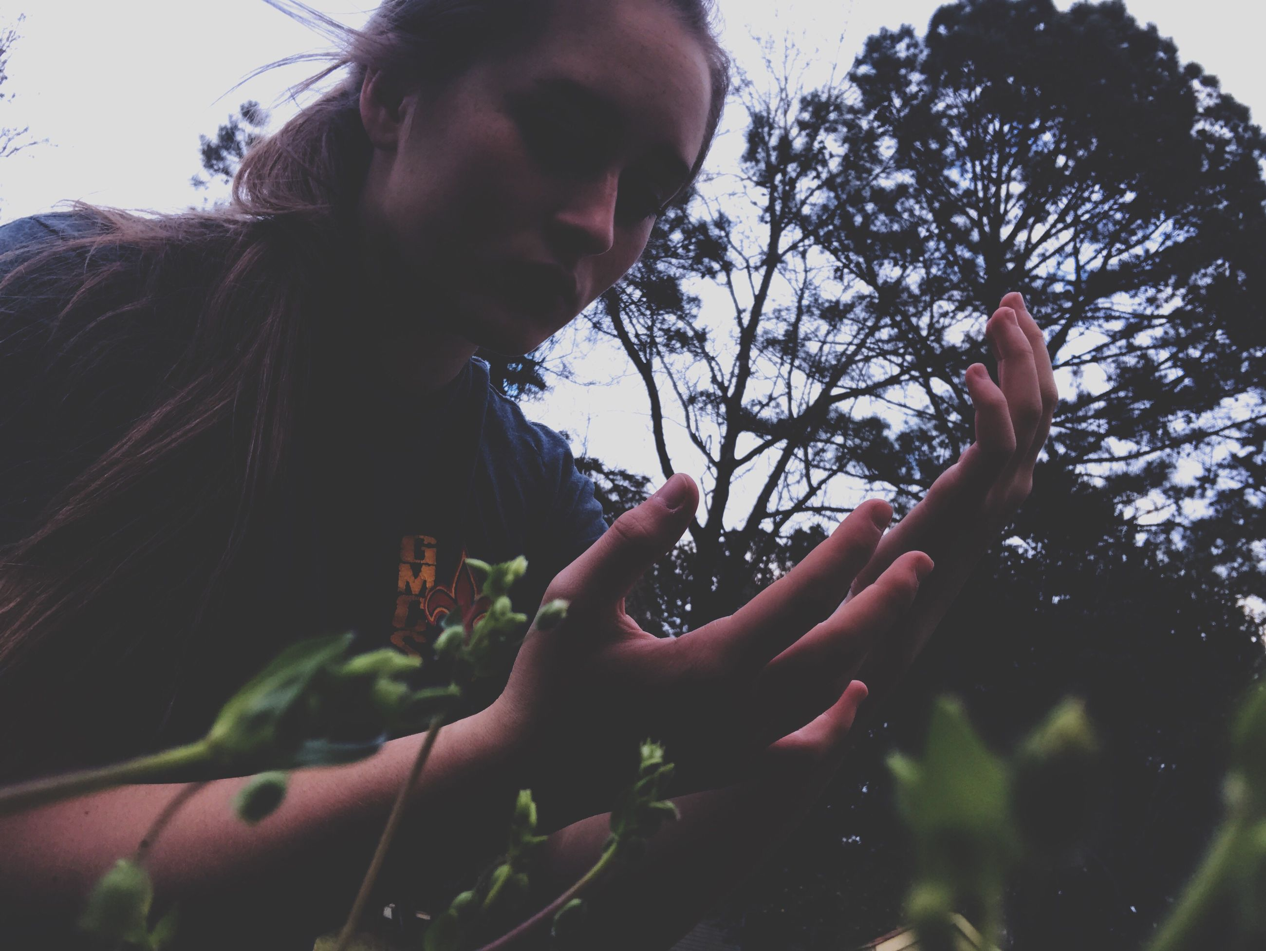 tree, real people, low angle view, one person, human hand, lifestyles, outdoors, growth, sky, day, nature, young adult, close-up