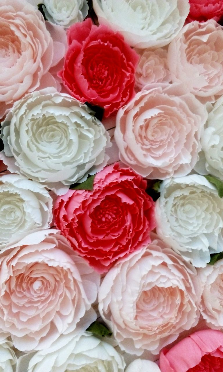 flower, rose - flower, full frame, backgrounds, freshness, no people, indoors, close-up, variation, bouquet, multi colored, fragility, beauty in nature, flower head, food, day