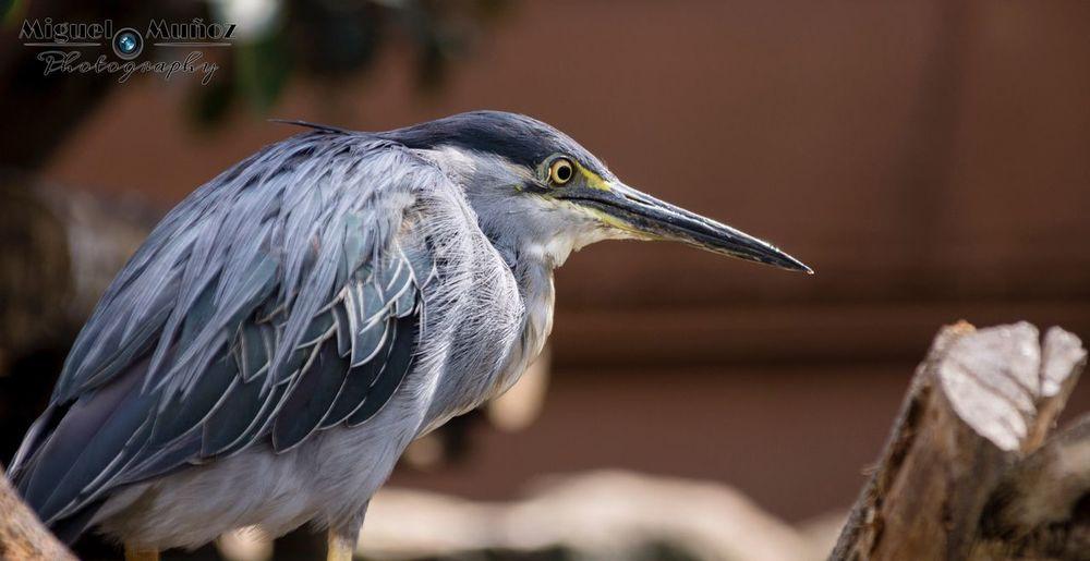Fotografía tomada en el Oceanografic (Valencia). Editada en camera raw. Animal Themes Bird Nature Zoology Beauty In Nature One Animal First Eyeem Photo
