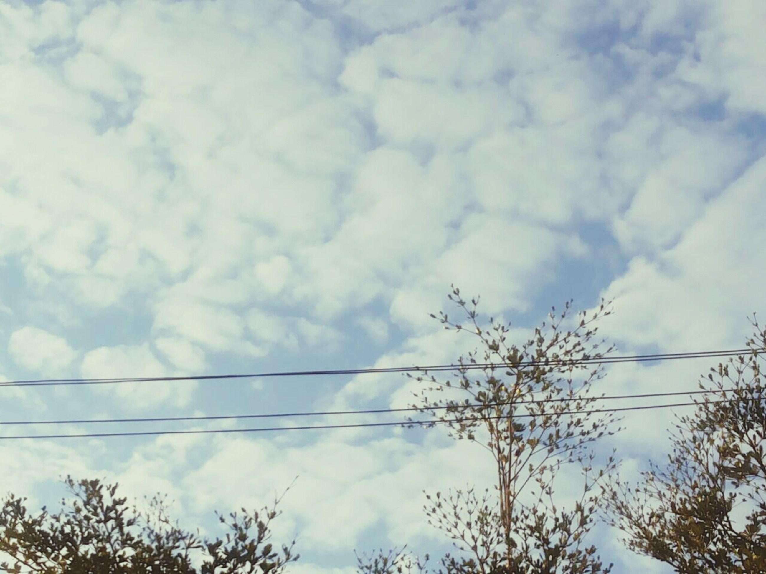 low angle view, sky, tree, cloud - sky, power line, cloudy, cloud, nature, tranquility, beauty in nature, cable, blue, branch, silhouette, electricity, outdoors, scenics, no people, high section, growth