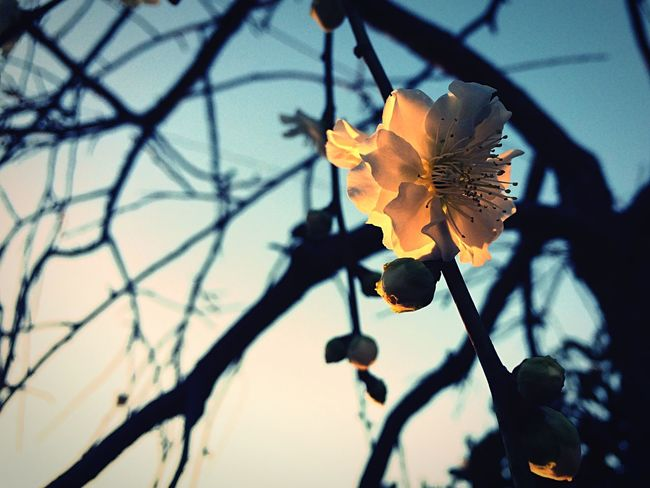 Flower Nature Beauty In Nature Fragility No People Sunlight White