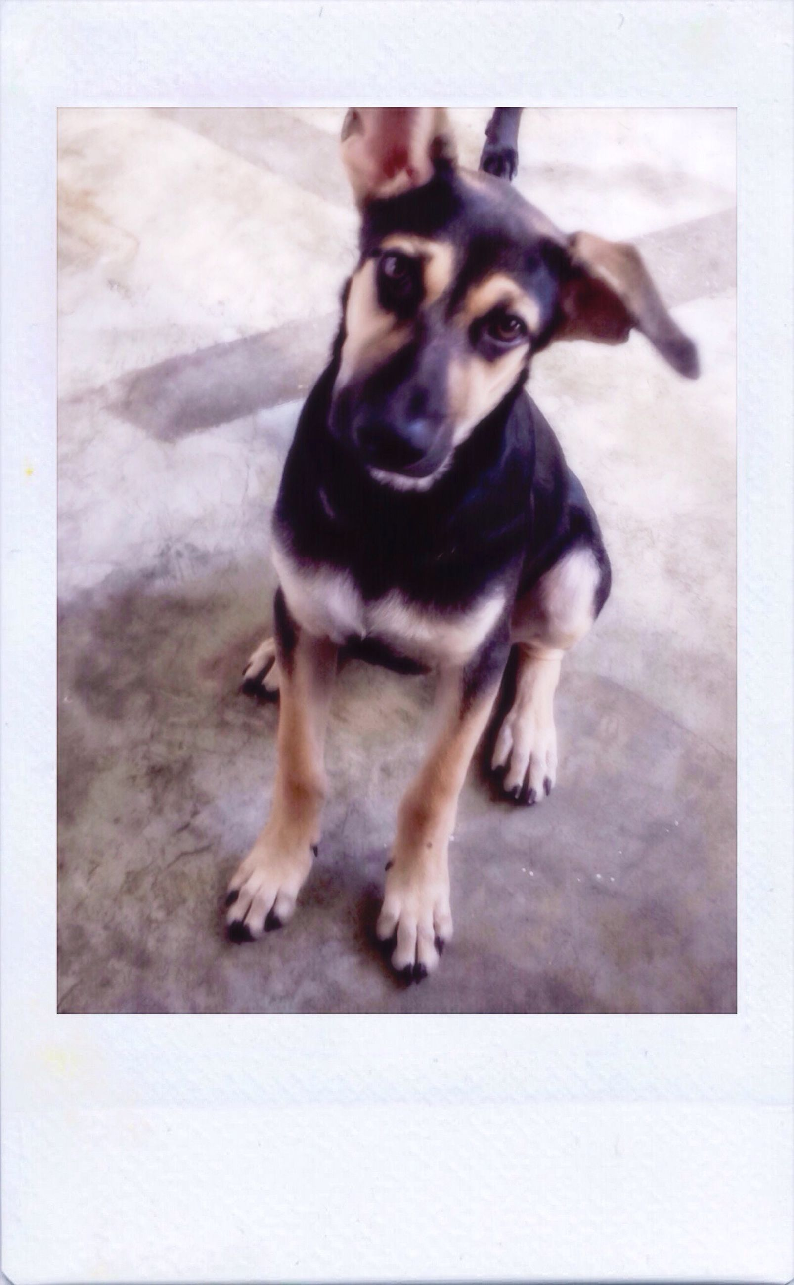 domestic animals, pets, transfer print, one animal, animal themes, auto post production filter, dog, mammal, field, looking, zoology, no people, animal, snout