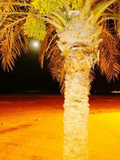 Color Palette EyeEm Best Shots - Nature Palm Trees Orange Colour