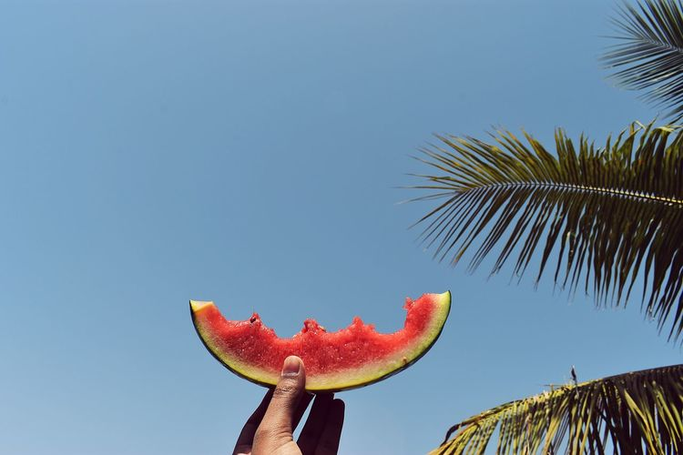 half eaten ! Halfeaten Watermelon Summer Summertime Juicy Tree Tropical Climate Blue Day Plant Clear Sky Watermelon Healthy Eating Copy Space Food No People Wellbeing Leaf Outdoors Food And Drink Fruit