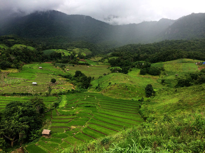 Agriculture Beauty In Nature Day Field Fog Growth High Angle View Landscape Mountain Nature No People Outdoors Rice Paddy Ricefield Rural Scene Scenics Sky Terraced Field Tranquil Scene Tranquility Tree Travel Destinations Travel Photography Perspectives On Nature