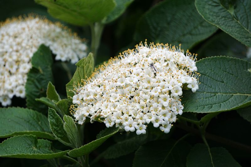 Plant Flower Flowering Plant Growth Beauty In Nature White Color Leaf Freshness Fragility Plant Part Nature Flower Head Petal No People Green Color