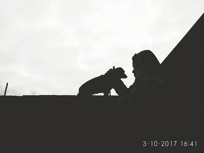 Silhouette Dog