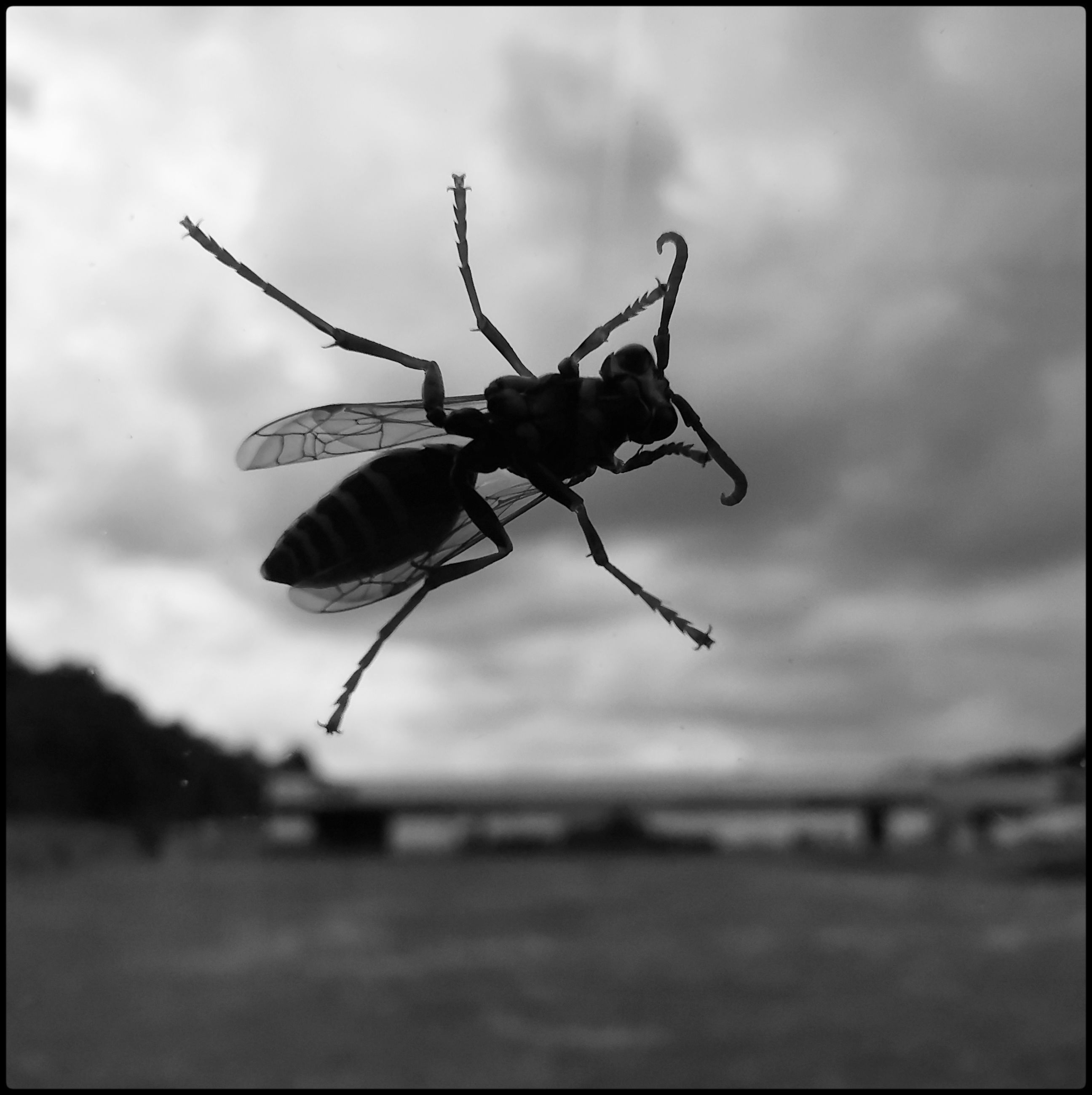 animal themes, animal, insect, animal wildlife, one animal, black and white, wildlife, focus on foreground, monochrome, close-up, monochrome photography, nature, animal body part, no people, auto post production filter, outdoors, black, day, transfer print, animal wing