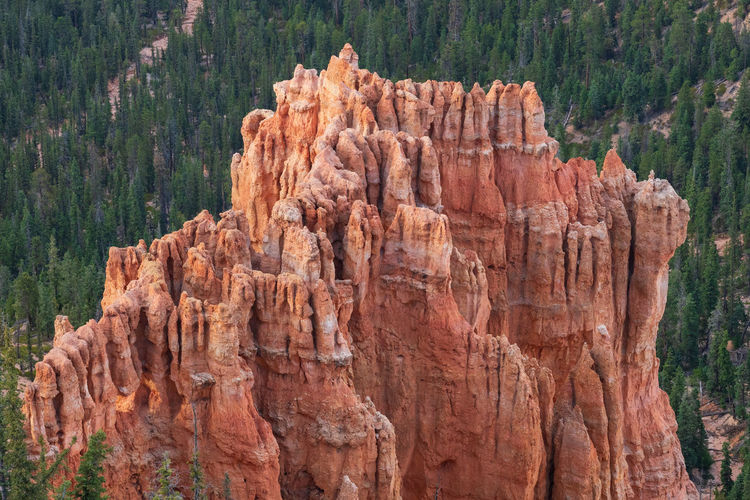 the overwhelming Bryce Canyon Rock Rock - Object Non-urban Scene Nature Beauty In Nature Travel Destinations No People Scenics - Nature Tranquility Tranquil Scene Outdoors Eroded Formation Bryce Canyon Utah National Park Rock Formation Tree Solid Geology Travel Day Land Plant Physical Geography
