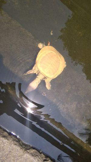 White Tortoise Beetle UnderSea Water Sea Life Swimming Underwater Sea Reflection Animal Themes