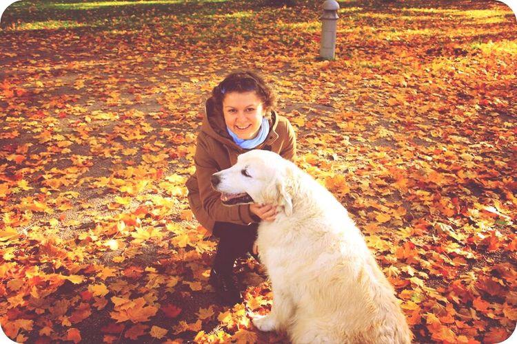 собака-мечта) I Love Dogs