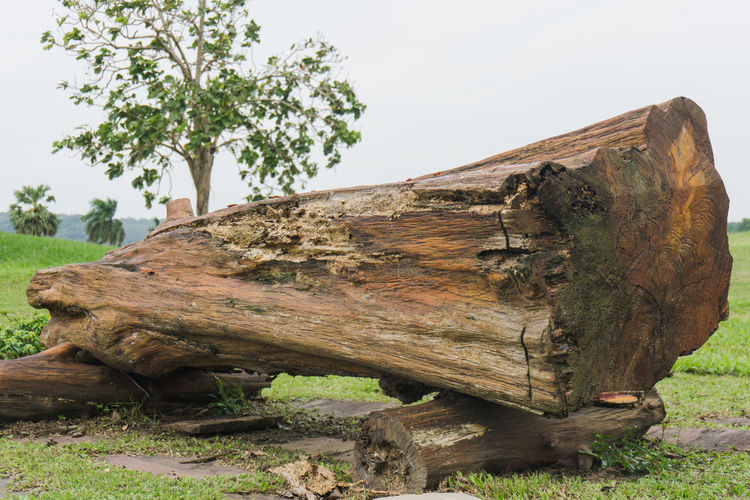 Bark Clear Sky Day Falling Field Grass Growth Land Log Nature No People Outdoors Plant Sky Timber Tranquility Tree Tree Trunk Trunk Wood Wood - Material