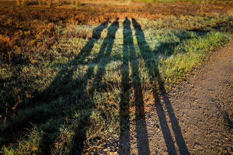 Selfie of four, Shadows in the morning light, Ovar, Portugal Aveiro Field Focus On Shadow Four Grass Grass Area Green Color Group Of Four Group Of People Land Morning Morning Light Nature Outdoors Ovar Portugal Remote Selfie Shadow Shadows Shadows & Lights Sunlight Unrecognizable Person
