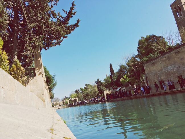 Turkey Dove First Eyeem Photo Turkey Şanlı Urfa Ramazan Y. Urfa More happy Turkish mosque Fish Of Lake love EyeEmbestshots Eyeembestshots