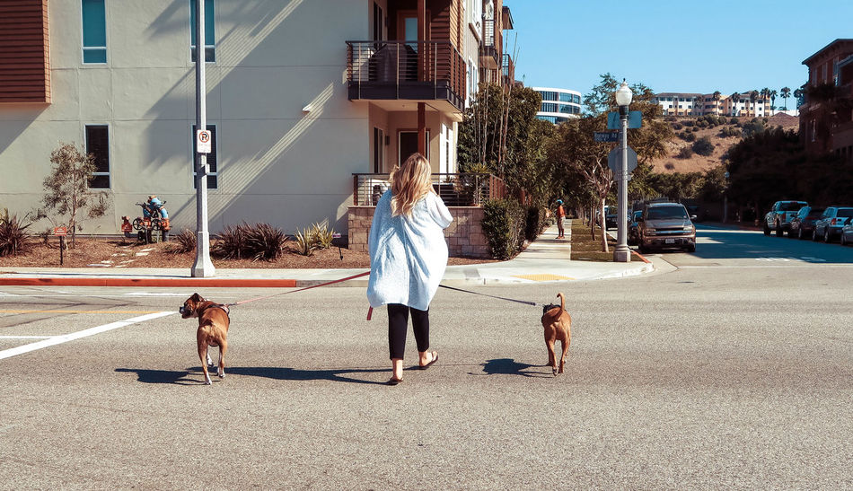 Woman is walking two dogs Dog Walking Friends Dog Dog Lead Doggy Outdoors Owner Pets Real People Road Street Walking