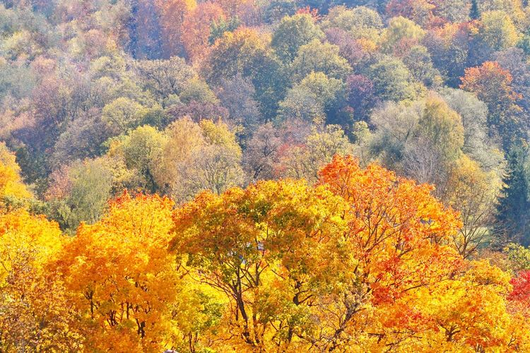 Autumn colors Autumn Leaves Autumn Landscape_Collection Landscape_photography Landscape Tree Multi Colored Backgrounds Full Frame Beauty Textured  Yellow Close-up Sky Blooming Plant Life