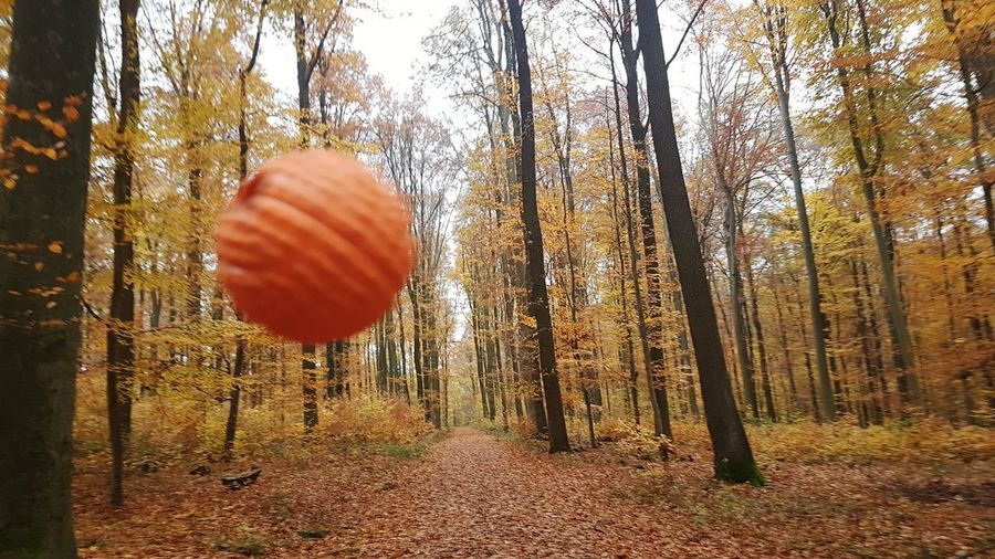 Orange point Orange Orange Color Ball Point Point Of View View Scenics EyeEm EyeEmNewHere EyeEm Best Shots Minimalism Calmness Of Nature Live Authentic Live Moments Tree Tree Trunk Hanging Sky Landscape Bare Tree WoodLand Branch Fallen Tree Forest Dried Plant