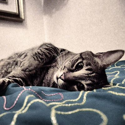 Feralcat ねこ 냥스터그램 Meo katt 길냥이 katze 貓 動物 chat kitten neko 캣스터그램 straycat 고양이 macska 野良猫 猫 길고양이 mace gatto cat kitty 3 kedi miaou のらねこ 4 ilovecat ネコ