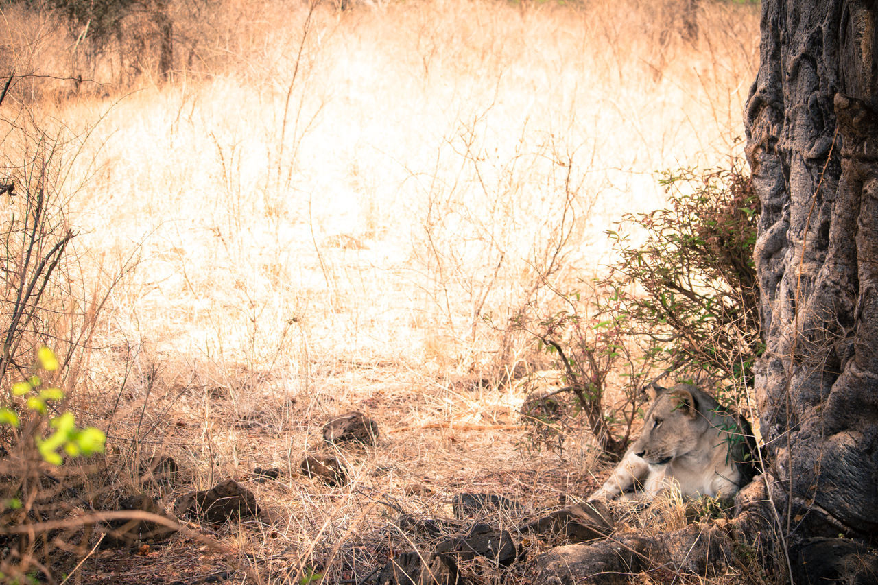 one animal, tree, tree trunk, animals in the wild, animal themes, no people, nature, day, branch, bare tree, outdoors, mammal