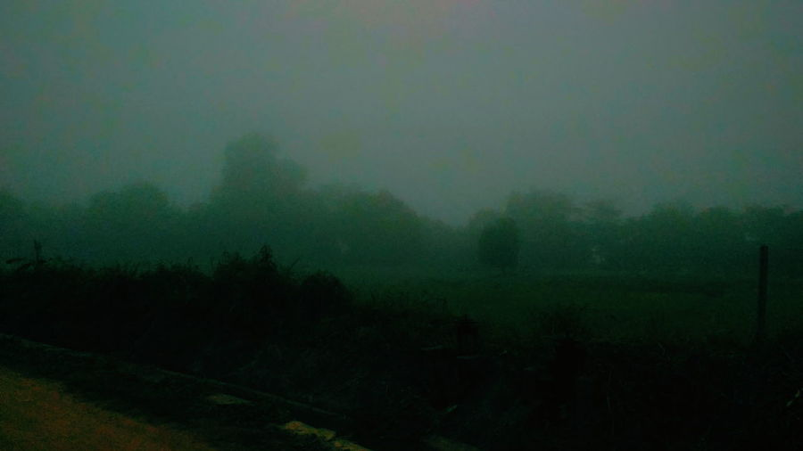 Morning or evening? Fog Beauty In Nature Landscape Tree Agriculture Rain Torrential Rain Cold Temperature First Eyeem Photo Field Agriculture Beauty In Nature Grass Freshness