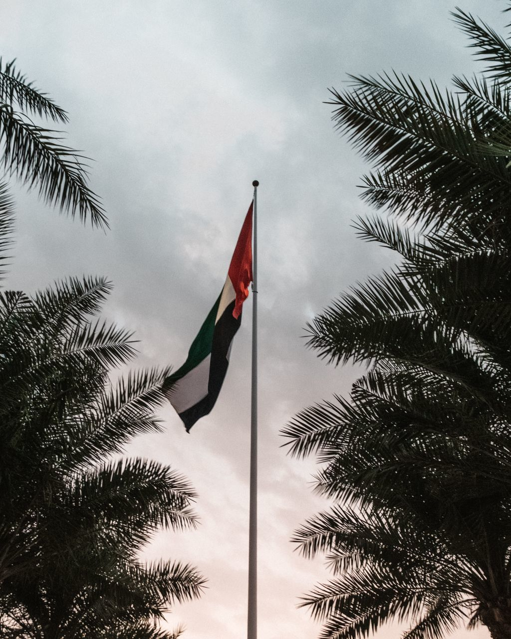 flag, tree, patriotism, low angle view, plant, sky, nature, growth, palm tree, cloud - sky, day, tropical climate, no people, pole, wind, pride, outdoors, environment, leaf, palm leaf