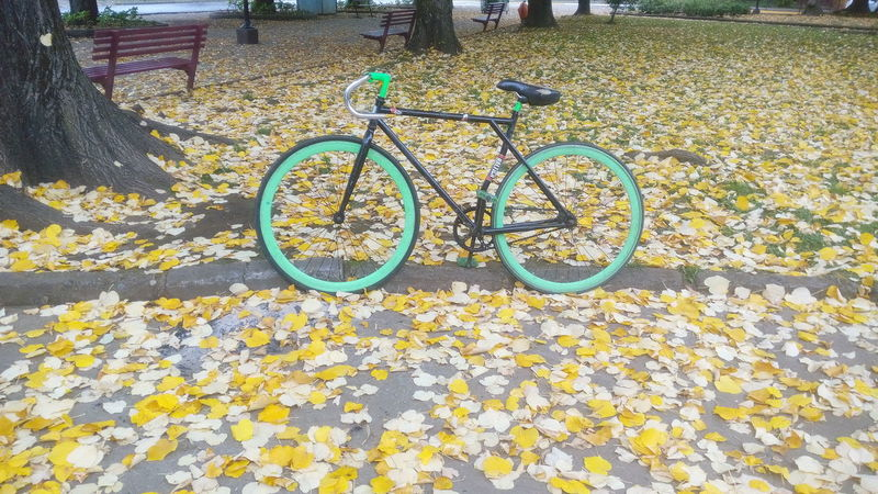 Bike Bike Week Fixie Fixieporn Fixed Bike Fixedgear Tannus Autumn Colors Autumn Collection Autumn🍁🍁🍁 Green Color Taking Photos Check This Out Amateurphotographer  Amateurphotography The Purist (no Edit, No Filter) Square
