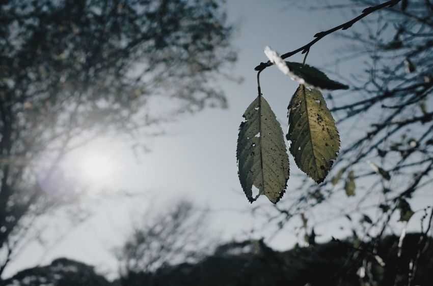 Streetphotography Light And Shadow Snap Vscocam Nature VSCO Tree Plant Focus On Foreground Nature Branch Leaf Plant Part