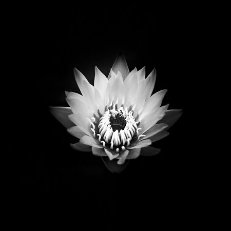 Shades Of Grey Fineart Black And White Monochrome Cmmaung Cmmaung.me Flower
